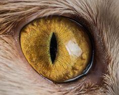 Connu pour ces clichés de célébrités à quatre pattes, telles que Lil Bub, Grumpy Cat ou Pudge, le photographe américain Andrew Marttila est un fana de félins. Il ne se lasse pas de les photographier sous toutes les coutures, sublimant ...