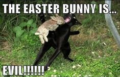 Find very good Jokes, Memes and Quotes on our site. Keep calm and have fun. Funny Pictures, Videos, Jokes & new flash games every day. Happy Easter Meme, Funny Easter Memes, Funny Easter Pictures, Easter Bunny Images, Funny Easter Bunny, Funny Bunnies, Funny Kids, Bunny Meme, Photos On Facebook