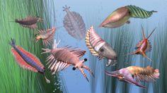 12 - Anomalocaris (groupe frère des arthropodes) - Opabinia, Amplectobelua (dans le fond), Anomalocaris (à dte Opabinia), Laggania (tête grise), Hurdia (vert), Kerygmachela kierkegaardi (rouge), Pambdelurion (tête blanc violet) - Cambrien