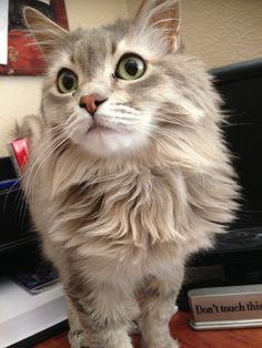 <b>You know things are bad when a cat is prettier than you.</b>