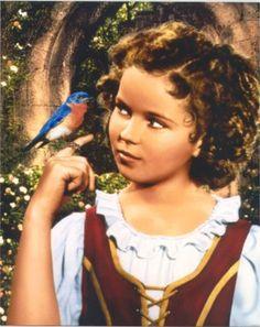 blue bird shirley temple