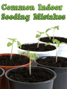 Common Indoor Seeding Mistakes. There's nothing more rewarding than growing plants from the start, but a lot can go wrong in the early stages. Here's what