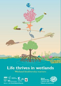 Home - WorldWetlandsDay World Wetlands Day, Design Guidelines, Coloring For Kids, Graphic Design Inspiration, Infographic, Activities, Poster, Life
