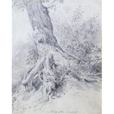 The Root of a Tree at Hampstead, by John Constable, Pencil. England, 1831.