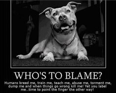 Uplifting So You Want A American Pit Bull Terrier Ideas. Fabulous So You Want A American Pit Bull Terrier Ideas. Perros Pit Bull, Pitbulls, Stop Animal Cruelty, Dog Fighting, Pit Bull Love, Pitbull Terrier, Bull Terriers, Staffordshire Terriers, American Staffordshire