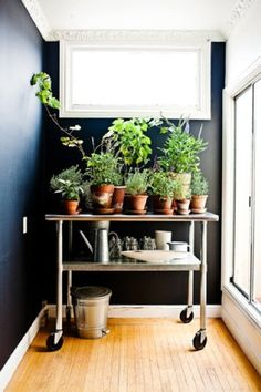 good idea to use a cart to group plants together + to store watering cans, etc.