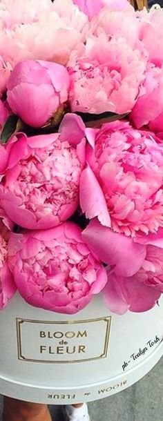 ❇Téa Tosh❇To be a Peonie                                                                                                                                                                                 More