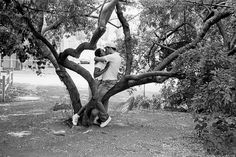 bcl on tree