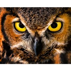 Contemporary Black /& White Great Horned Owl Bird Yellow eye Matted Picture A515