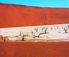 DEADVLEI - Snový lesné krajina v Namíbii