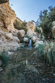 Une journée à Ein Gedi en Israël ! #israel