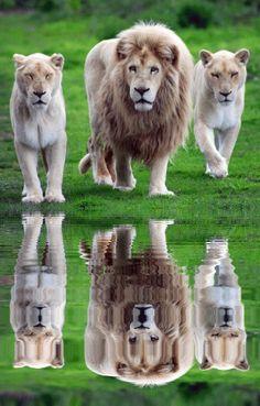 Todo o animal tem o direito de viver e de crescer ao ritmo e nas condições de vida e de liberdade que são próprias da sua espécie.