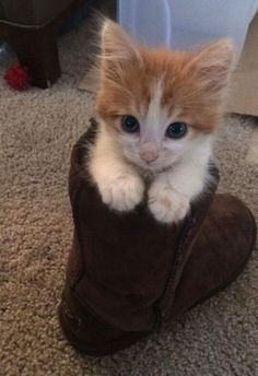 So I Shoved Him In A Boot | Cutest Paw