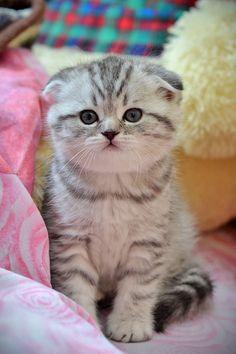 Kitten by Sergey Kuzmenkov, via 500px