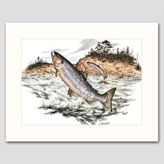 """Salmon Art w/Mat (Fishing Wall Decor, Home Office Artwork) """"Swimming Upstream"""" -- Vintage Matted Print. Vintage Salmon Art Print w/Mat , Wildlife Wall Decor, Fish Artwork -- Unframed Matted Print One in a beautiful series of 30 woodland animal and bird illustrations for home, office or nursery One """"Salmon Swim Upstream, Summer"""" vintage, mint-condition James Lockhart print (attached to a new, off-white mat) Finely detailed 1970s artwork: Atlantic salmon swimming inland & upstream, jumping..."""
