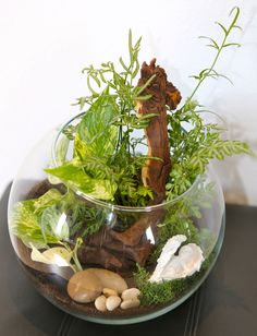 Tropical Terrarium in a glass bubble. Namibian Hard Driftwood a spectacular feature. Tropical Terrariums, Garden Terrarium, Miniature Gardens, Garden In The Woods, Horticulture, Driftwood, Garden Ideas, Succulents, Bubbles