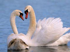 Swan Lake Sumter SC by catscorner990