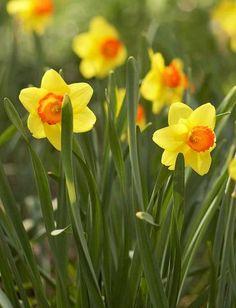 537 best garden ideas garden design images container garden rh pinterest com