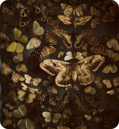 Vintage moth specimens. Photo by Hanna Bi