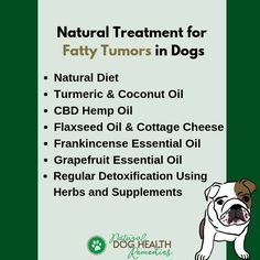 Fatty tumors in dogs (lipomas) are quite common. What causes fatty tumor in dogs? Can a fatty tumor turn into cancer in dogs? How do you shrink canine fatty tumors? Is there any natural treatment? Find out here. Turmeric Coconut Oil, Tumors On Dogs, Dog Illnesses, Oils For Dogs, Grapefruit Essential Oil, Natural Treatments, Natural Remedies, Dog Care, Dog Food Recipes