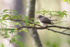 Tiny Bird, Birds 2, Google, Animals, Animales, Animaux, Animal, Animais