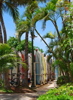 LOVE this pathway in Waikiki....have walked it a thousand times...would do so a thousand more