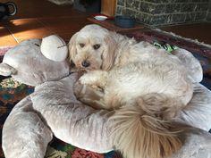 Linda loves her new teddy