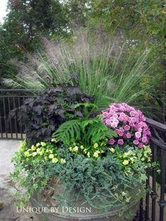 One wonderful display of beautiful plants to enjoy this summer!! Love all of them!!
