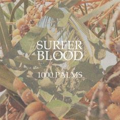Review of Surfer Blood '1000 Palms'