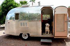 My dogs loved Airstream camping! Airstream Campers, Camper Caravan, Vintage Campers Trailers, Retro Campers, Cool Campers, Vintage Airstream, Gypsy Caravan, Camper Trailers, Airstream Interior