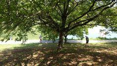 Lac du Causse walnoten