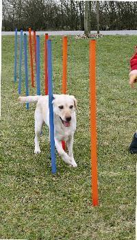 honden  parcours palen