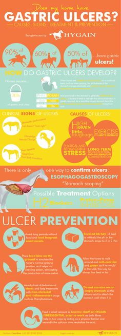 It is scary knowing that 37% to 60% of our beloved show and pleasure horses suffer from ulcers. Is your horse playing up and showing signs of discomfort especially around the girth area? Maybe his appetite is reduced and his body condition is slowly decreasing, these could all be signs of gastric ulcers and not …