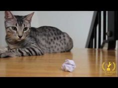"""The Friskies"" 2012 Finalist: ""Kitty Plays Fetch"" (Catchall Category)"
