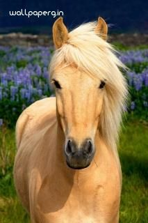 Download Horse wallpaper -Hd wallpaper from Animal hd wallpapers |Hd wallpapers for mobile and desktop.