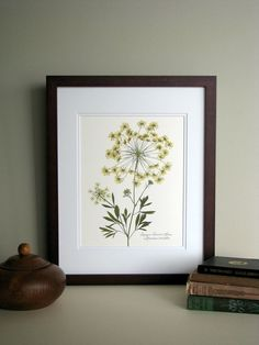 Pressed wildflower print, 11x14 double matted, Queen Annes Lace, bloom and stem, flower print, wall art no. 0045