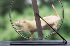 Thuốc diệt chuột thế hệ mới