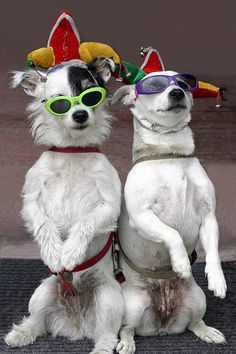 Let's party tonight. We are ready for the party with cool glasses and stunning caps. Are you ready for the party