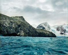 Musgo antártico. Briofitas o plantas no vasculares. Los de la imagen se encuentran en la isla Elefante en la Antártida y tienen una edad apr...