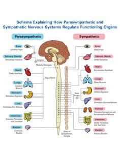 restorative yoga | Parasympathetic stimulation via Restorative Yoga postures encourages a ...
