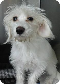 Gone  Knoxville, TN - Terrier (Unknown Type, Medium) Mix. Meet Ulla a Dog for Adoption.