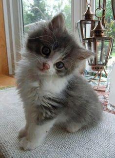 Aawww..cute cat!