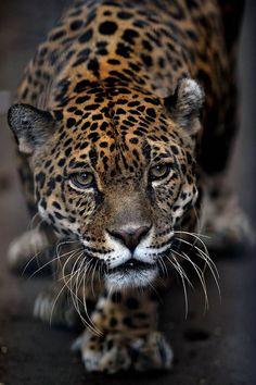 Animal Tracks- slideshow - slide - 6 - NBCNews.com