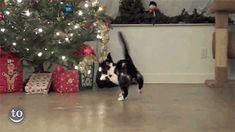 cat fail christmas lights christmas tree