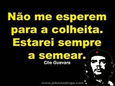 Gato Branco e Gato Preto - Che Guevara
