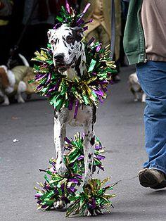 Happy Fat Tuesday! Happy Mardi Gras! ★ Even Dogs Celebrate Mardi Gras ★ peoplepets.com