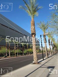 A Palm Tree Lined Street In Phoenix, Arizona