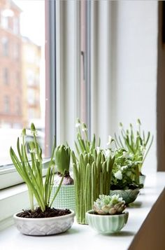 window garden planted in collected dishes