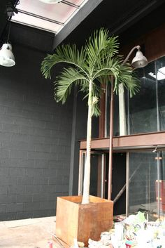 le palmier (de Tabary Le Lay )