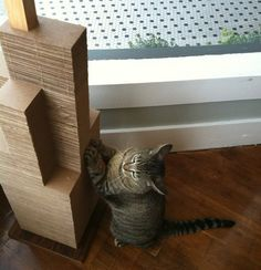 DIY The Cat Sky Scratcher